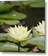 Water Lily Dragonfly 2 Metal Print