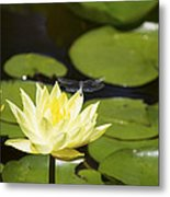 Water Lily Dragonfly Metal Print