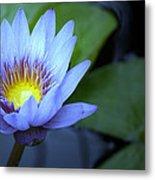 Water Lily Glow Metal Print