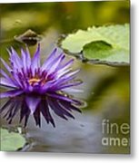 Water Lily Kissing The Water Metal Print