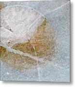 Water Lily Leaf In Ice, Boggy Lake Metal Print