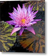 Water Lily Magic Metal Print