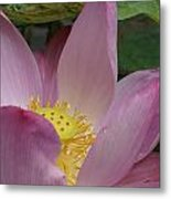Water Lily Shower Head Metal Print by Gregory Smith