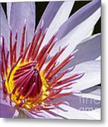 Water Lily Soaking Up The Sun Light Metal Print