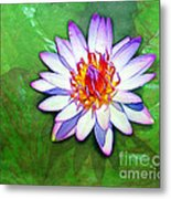Water Lily Study Metal Print