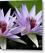 Water Lily Twins Metal Print