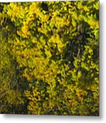 Water Reflection Abstract Autumn 1 F Metal Print
