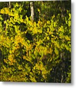 Water Reflection Abstract Autumn 1 G Metal Print
