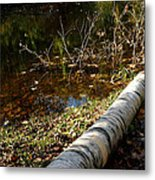 Water Seeing Metal Print