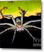 Water Spider Metal Print