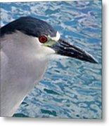 Watercolored Black-crowned Night-heron Metal Print