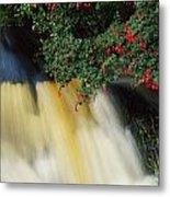 Waterfall And Fuschia, Ireland Metal Print