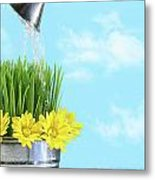 Watering Flowers And Grass For Spring Metal Print
