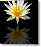 Waterlily And Reflection Metal Print