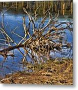 Waterlogged Tree Metal Print