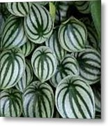 Watermelon Leaves 2 Metal Print