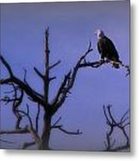 Watson Lake Bald Eagle Metal Print