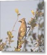 Wax Wing In Sunshine  Metal Print