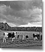Weather Talk Monochrome Metal Print