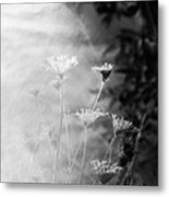 Weeds In A Haze Metal Print