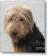 Well Trained Dog Metal Print