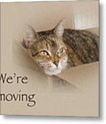 We're Moving Notification Greeting Card - Lily The Cat Metal Print