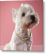 West Highland Terrier Wearing Pearl Necklace Metal Print