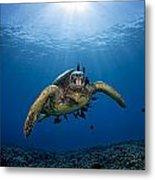 West Maui Sea Turtle Metal Print