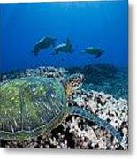 West Maui Sea Turtles Metal Print