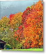 West Virginia Maples 2 Metal Print