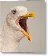Western Gull Calling Loudly Metal Print