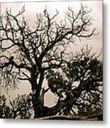 Western Winter Tree Metal Print
