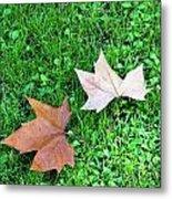 Wet Leaves On Grass Metal Print