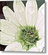 Wet Petals Metal Print by Artist and Photographer Laura Wrede