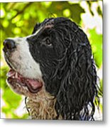 Wet Puppy 2 Metal Print