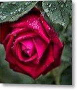 Wet Weather Rose Metal Print