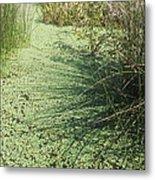 Wetland Shadows Metal Print
