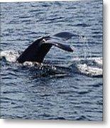 Whale Dive Metal Print