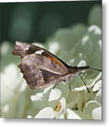 What A Schnoz On That American Snout Butterfly Metal Print