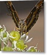 What Are You Pointing At Me Metal Print