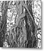 What Trees Know Metal Print by Betsy Knapp