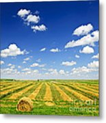 Wheat Farm Field At Harvest Metal Print