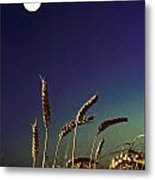 Wheat Field At Night Under The Moon Metal Print