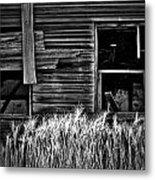 Wheat To Meet  Metal Print