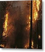 When Flames Crown Into Treetops Metal Print