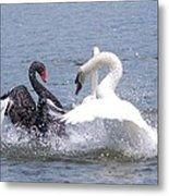 When Swans Attack Metal Print