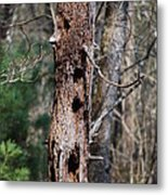 When Woodpeckers Attack Metal Print