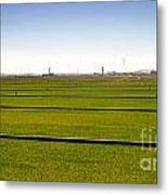 Where The Grass Is Growing Metal Print