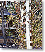 Where The Roses Cling Metal Print