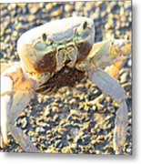 Which Way Is The Water Metal Print
